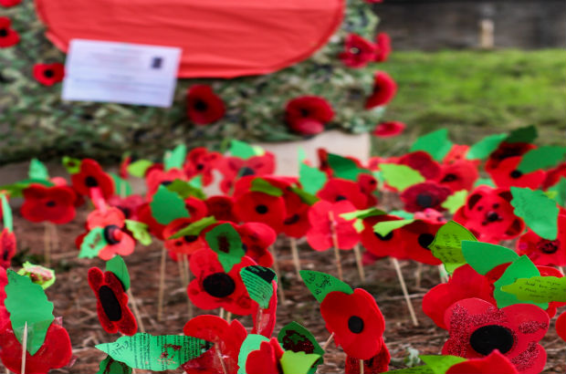Remembrance - Poppy display
