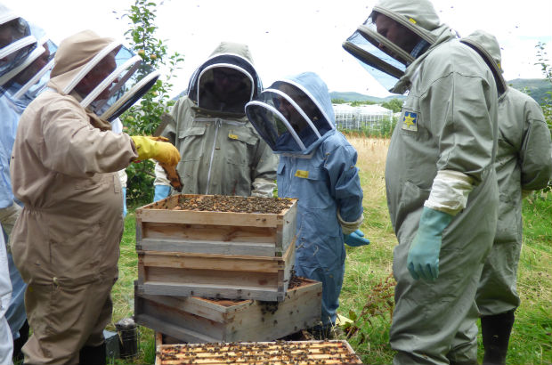 A group of children learning and looking at a beehive