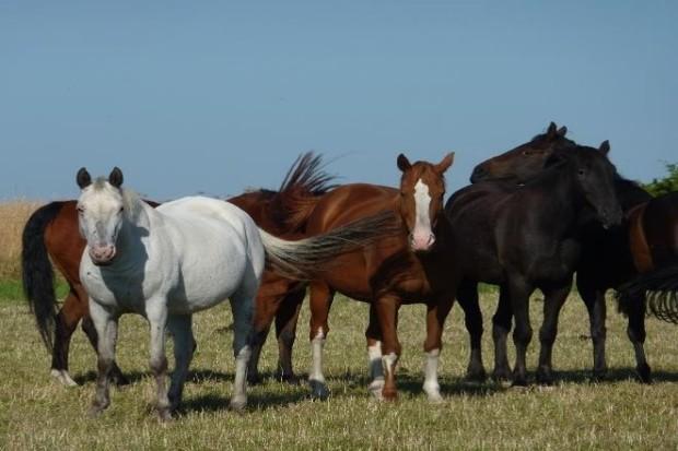 A team of horses